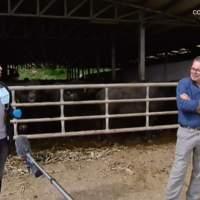 La Rai raccoglie l'appello degli allevatori: tra due mesi avremo finito le scorte e sarà un problema anche sfamare le bufale