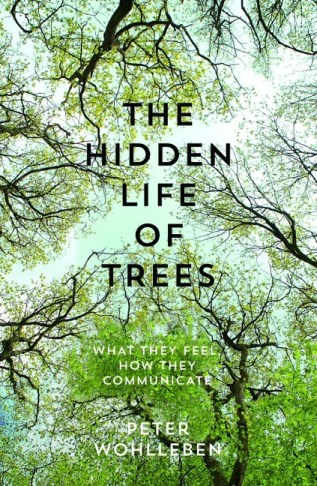 The cover of The Hidden Life of Trees, with an image looking up through a forest canopy.
