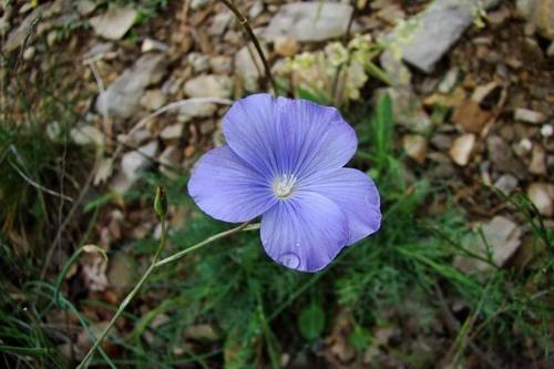 Les fleurs sauvages de Jean Yves de Houilles page 2