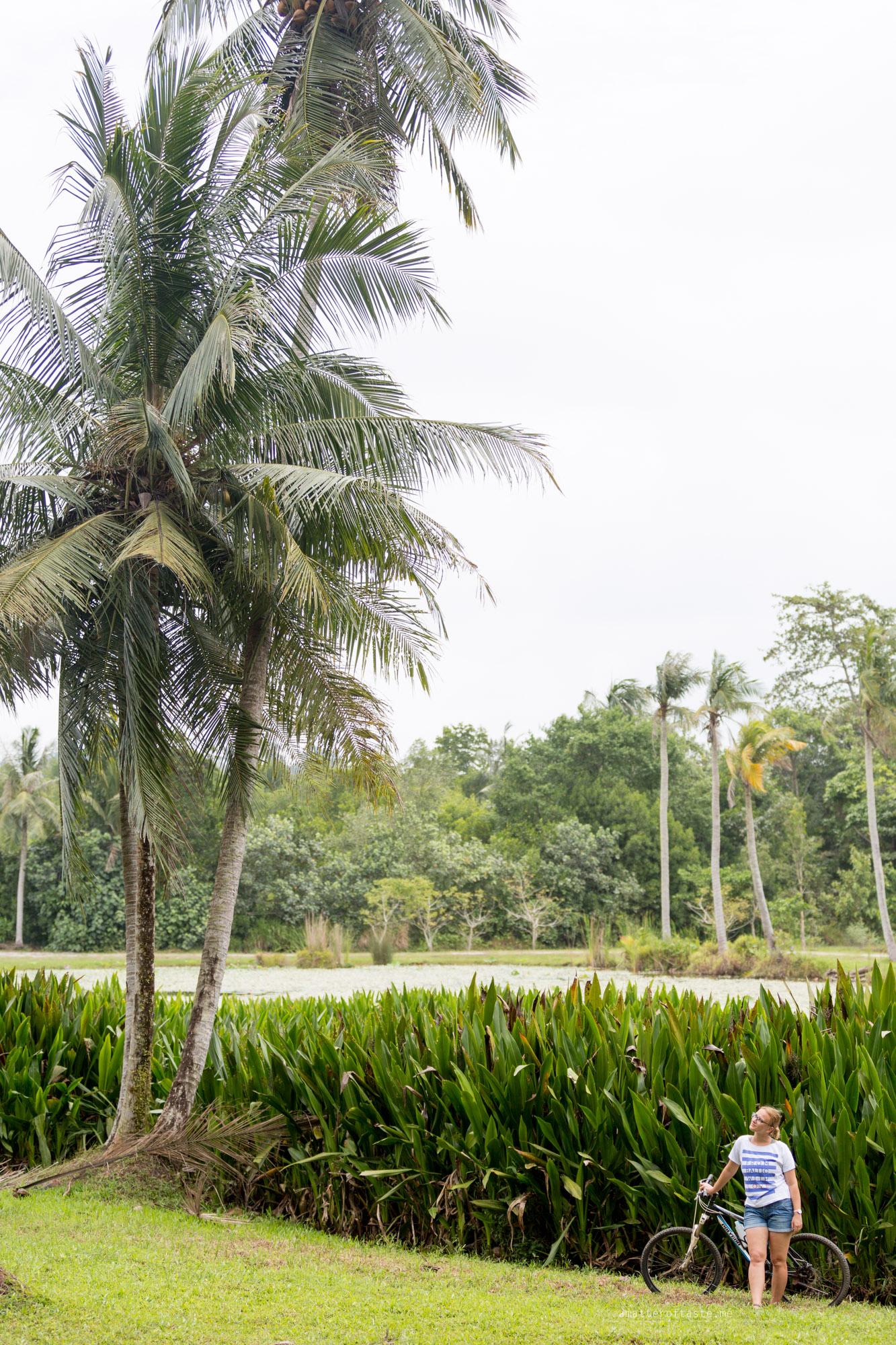 02-Pulau-Ubin-palm-trees