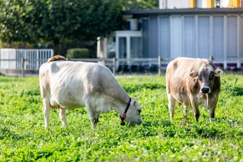 Liechtenstein road trip royal castle cows