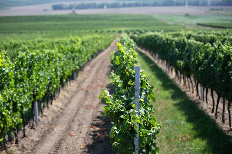 Tractor vineyards south moravia Czech Republic