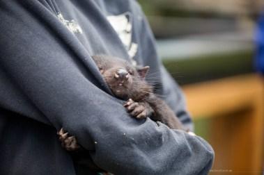 trowunna-wildlife-tasmania-06