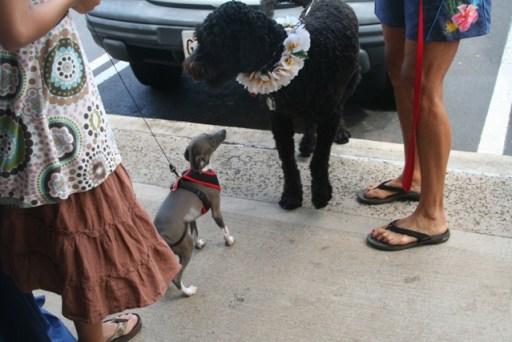 dog-pawty-2