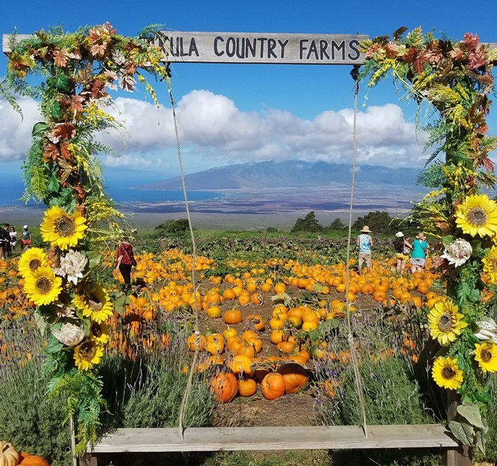 Kula Country Farm and Da Pumpkin Patch on Maui