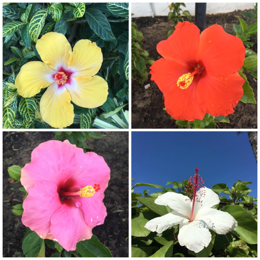 hibiscus-collage