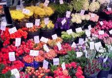 I saw and photographed these lovely flowers in the Place Monge markets one April in Paris.