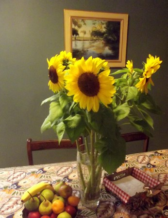 These sunflowers on our table have grown from buds to huge blossoms over the week.