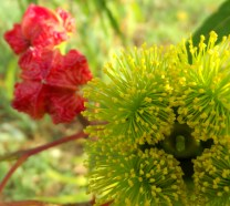 gum flowers 3