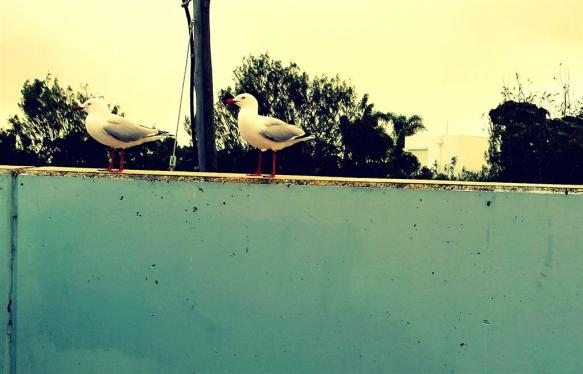 These seagulls were eyeing off my Krispy Creme doughnut. I was unmoved.