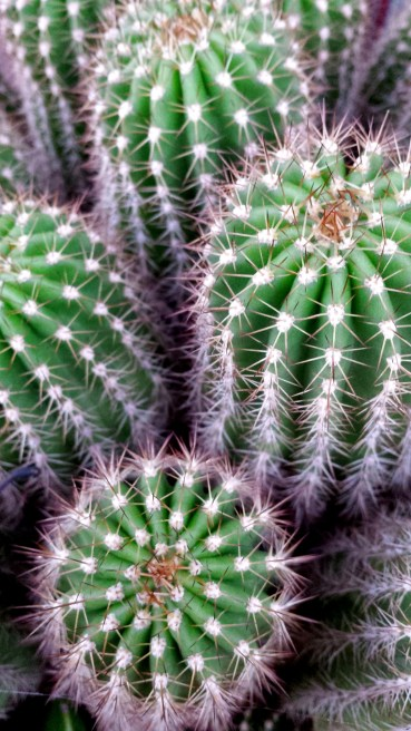 Every home has it's prickly moments. Being able to enjoy a good laugh in the face of adversity is essential.