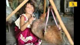 Chanson révolutionnaire Massi Tamazight les rebelles. T'Kout
