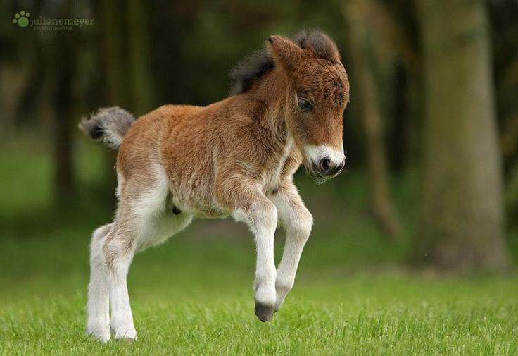 Cute Baby Hug Wallpapers Amazing Animal Moments 20 Precious Animal Photos That