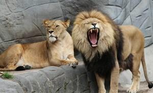 Daniel_and_Lions_Den