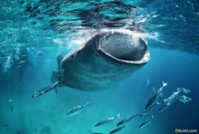 Bitcoin Whales Accumulate Thousands of Coins in the Last Two Months
