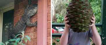 """30 amazing photos That Show Why Australia Is The Land Of """"Nope"""""""