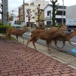 During the quarantine, this is how the animals occupied the deserted streets
