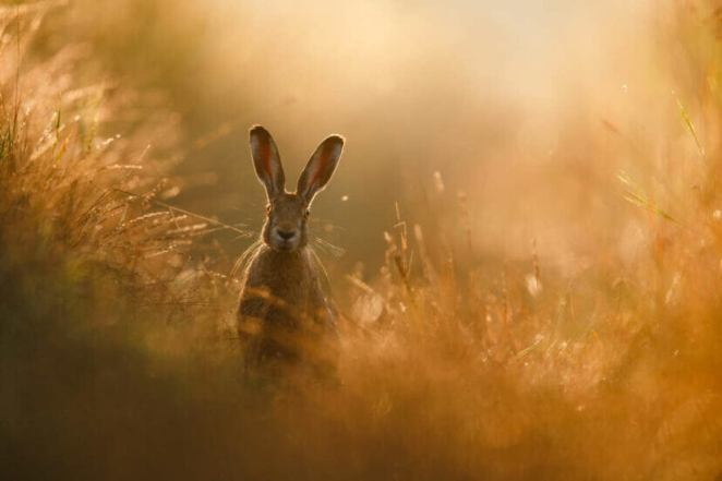 GDT Nature Photographer 2020 Peter Lindel Hare Dream