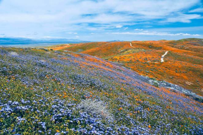 beautiful landscape of California superbloom