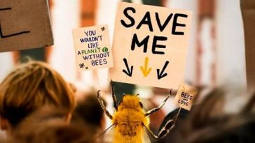 cutest campaign protect bees