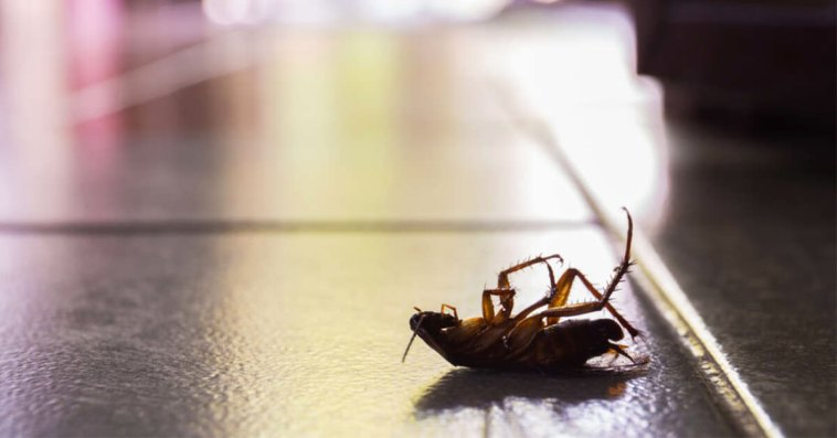 Facts related to Cockroaches Rapidly Evolving and almost impossible kill even survive nuclear apocalypse
