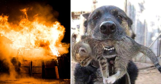 Hero Dog Ran Through A Burning House To Save His Little Kitten Friend