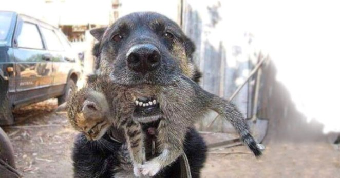 Hero Dog Rescue Little Kitten from Burning House in his mouth