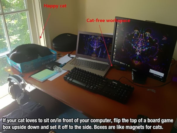 cat litter hacks for cat owners stop your cat from sitting on computer