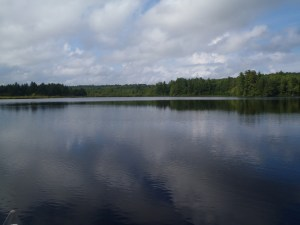 View of the woods along the northern shoreline of Bartlett Pond