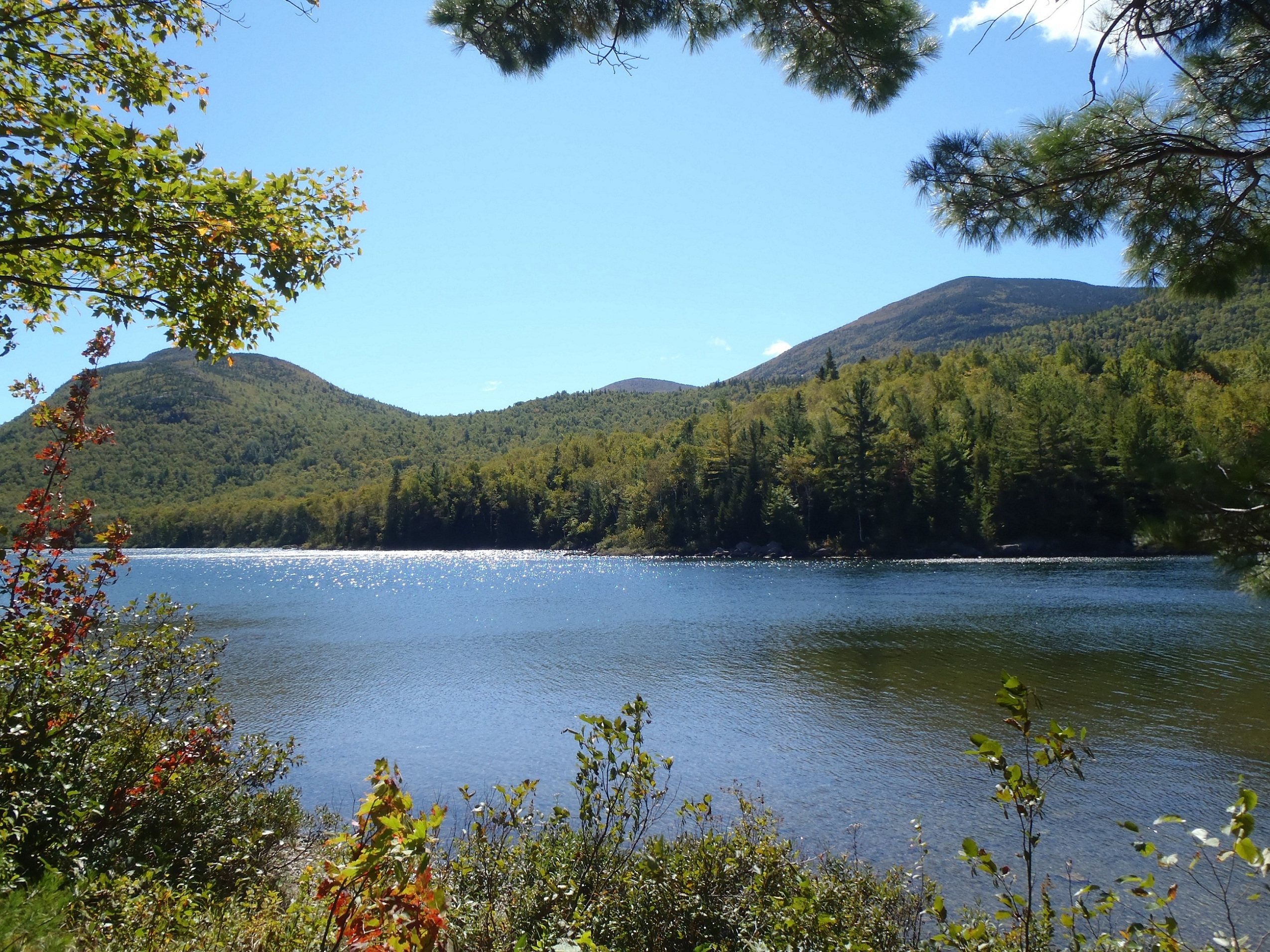 Native brook trout fishing in remote ponds in baxter state for Koi pond maine coon cattery