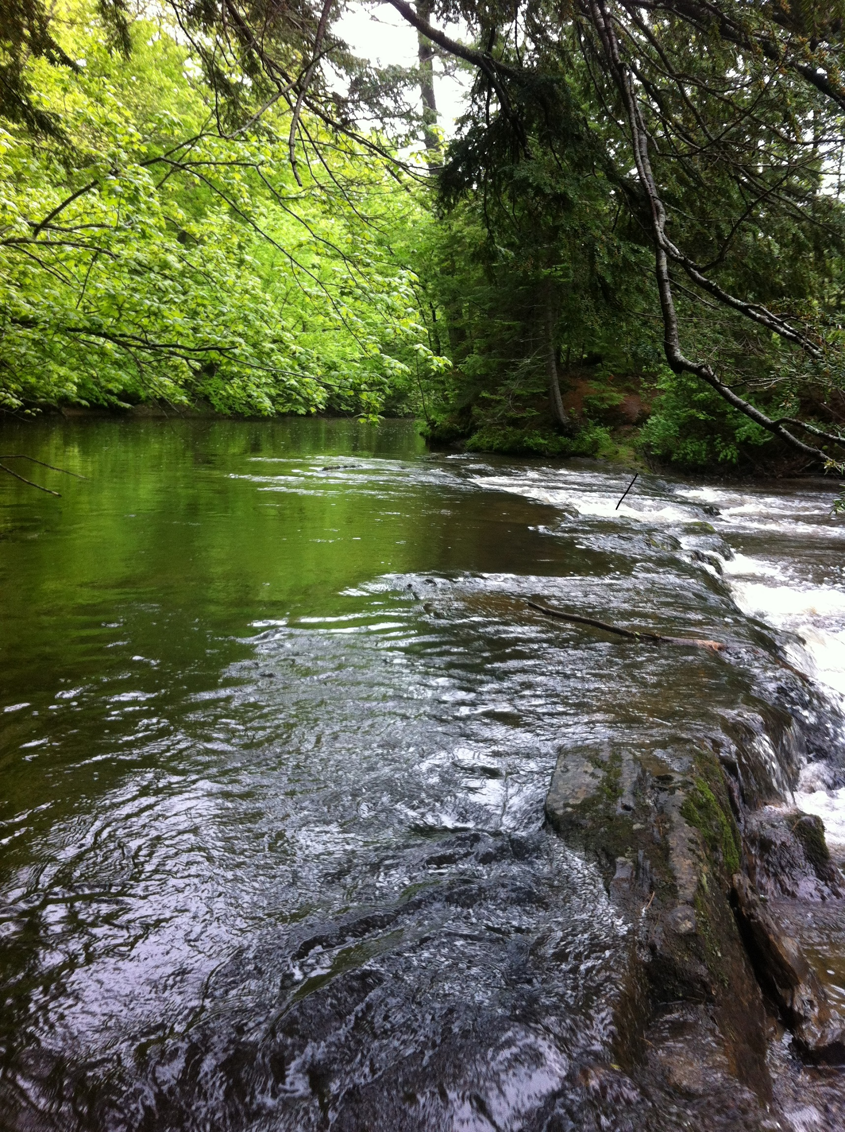 Trout fishing on the pleasant river windham maine may for Fish stocking near me