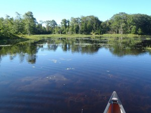 Notice the heavy vegetation mats in front of the canoe