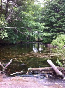 Ditch Brook (summer low flow) at the point where it enters Collins Pond