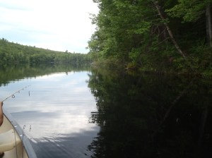 Aquatic vegetation is generally sparse along the shoreline of Bradley Pond, except in the outlet area