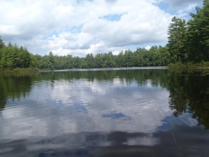 Pickerel Pond: peaceful, quiet, and secluded