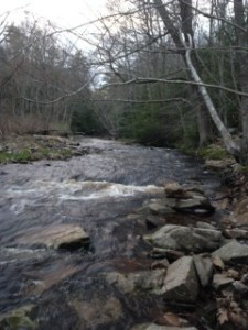 The Merriland River below Collins Road has many riffles and runs