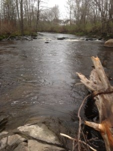 The Kennebunk River upstream of the Route 1 bridge provides great trout habitat