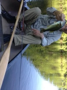 A small largemouth bass caught in the Presumpscot River between the boat launch and the pond