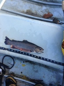 Brookies are just so beautiful in their fall spawning colors