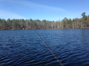 The shoreline of Chaffin Pond is completely free of houses or docks