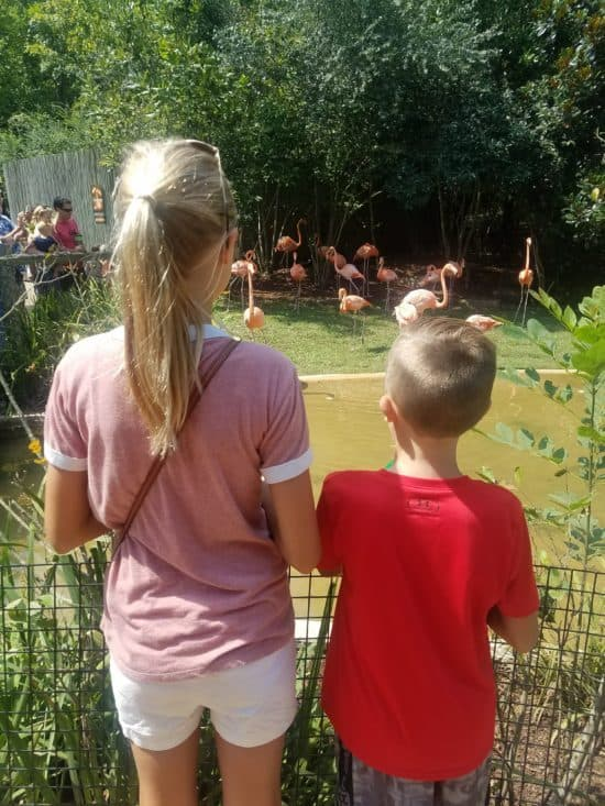 kids gazing at flamingos
