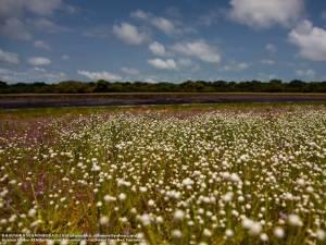 Villu based ecosystem in Wilpattu Naional Park