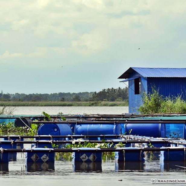 A fish breeding farm in the Urusita Wewa Reservoir