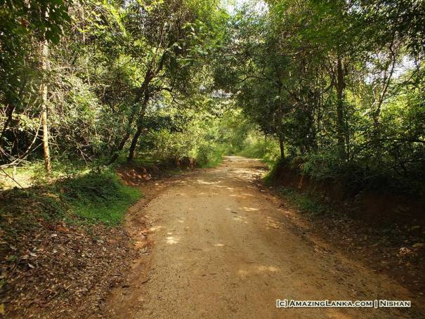 Walk through the tree cover to the Dambana Village