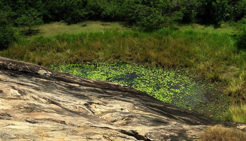 A pond at Pashana Pabbatha Rajamaha Viharaya