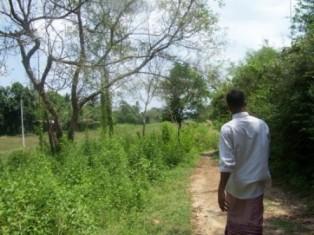 Right bank embankment at 7 Ela, Vijayarajapura