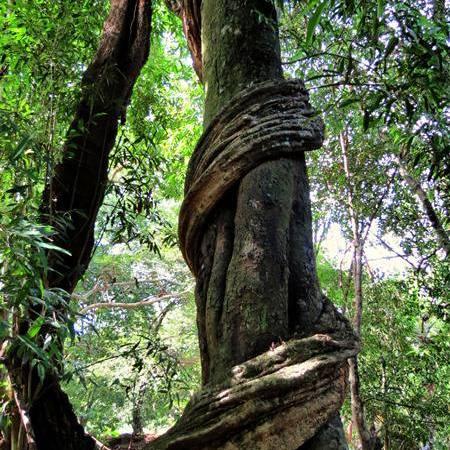 Nilgala Forest