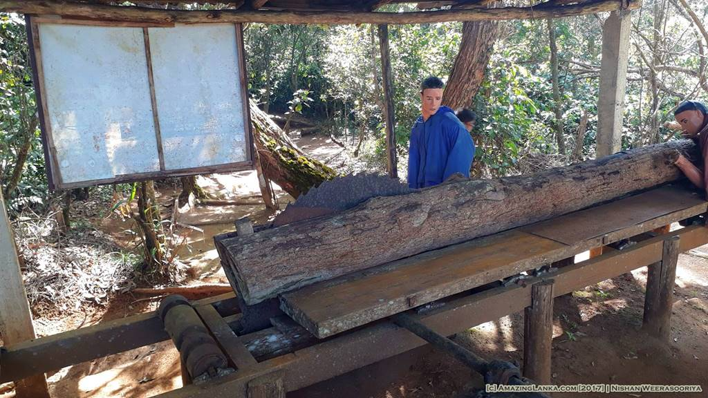 Milling trees into lumber - at the Kande Ela Forest Park