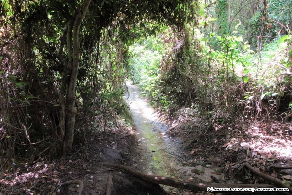 Gonamariyawa Natural Spring
