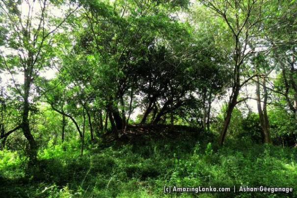 Ruins of the ancient stupa at Maha Andarawewa Archaeological Reserve / Andarawewa Walagamba Rajamaha Viharaya